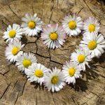 Hurtownia florystyczna – niezbędne akcesoria dla wyjątkowego rękodzieła